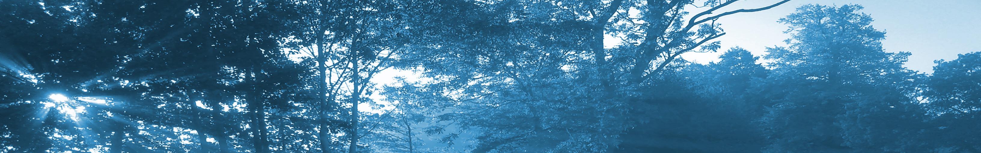 sun peeking through treetops